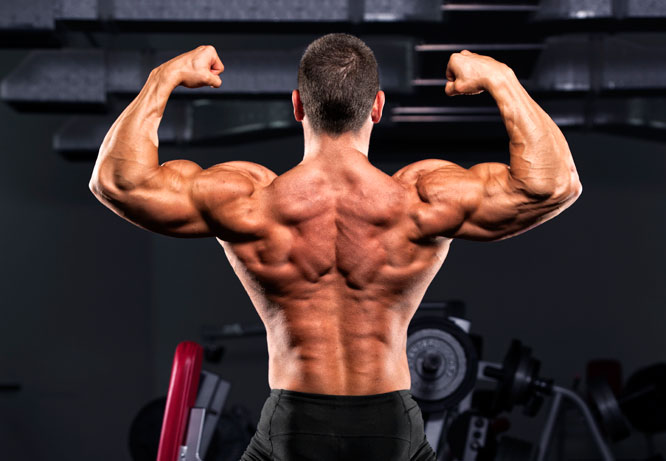 Best bodybuilding supplements for muscle growth